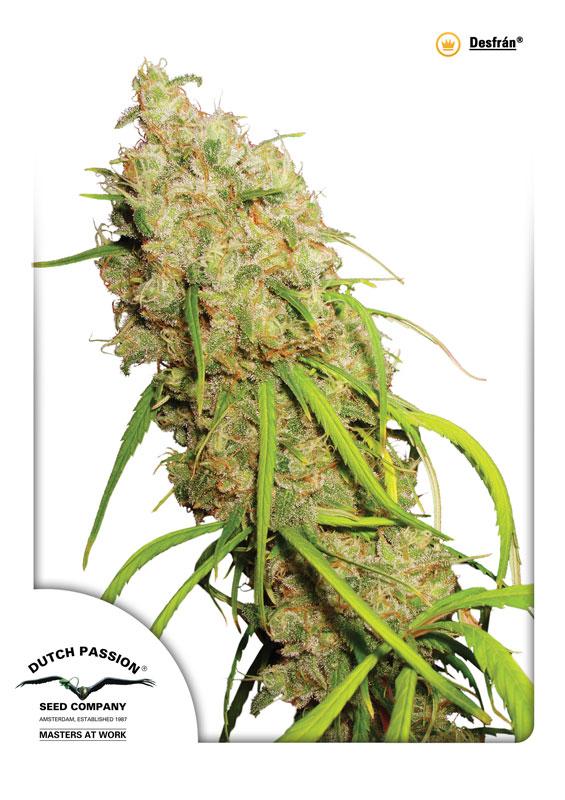 Desfran Cannabis Seeds